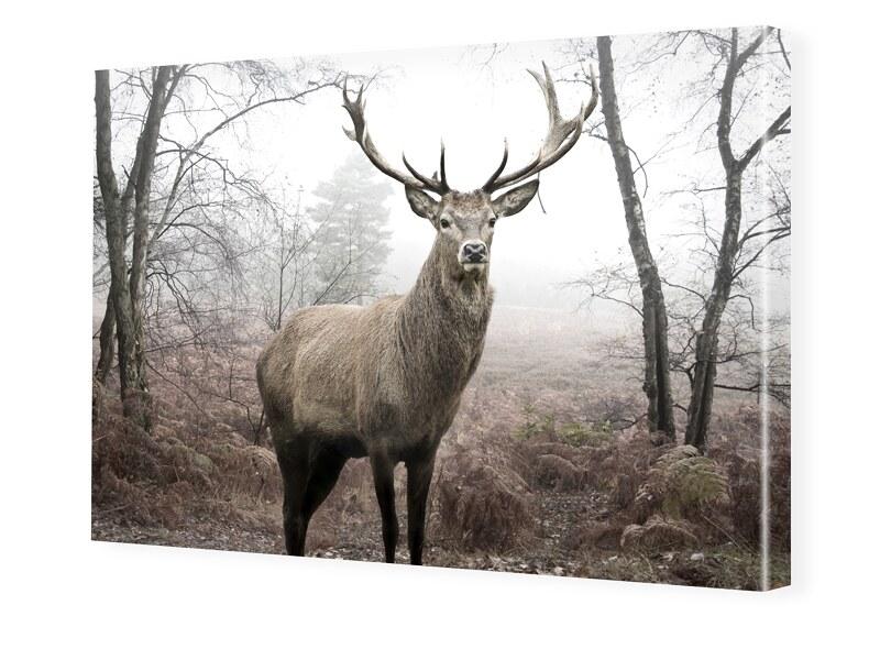 Hirschbilder Foto auf Leinwand im Format 80 x 6...