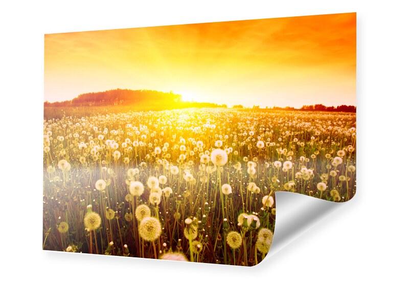 Pusteblume Bild Foto im Format 50 x 40 cm