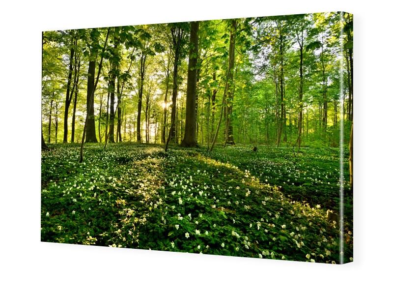 Waldbilder Foto auf Leinwand im Format 80 x 60 cm