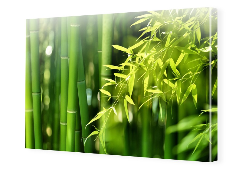 Bambusbild Leinwand drucken im Format 128 x 72 cm