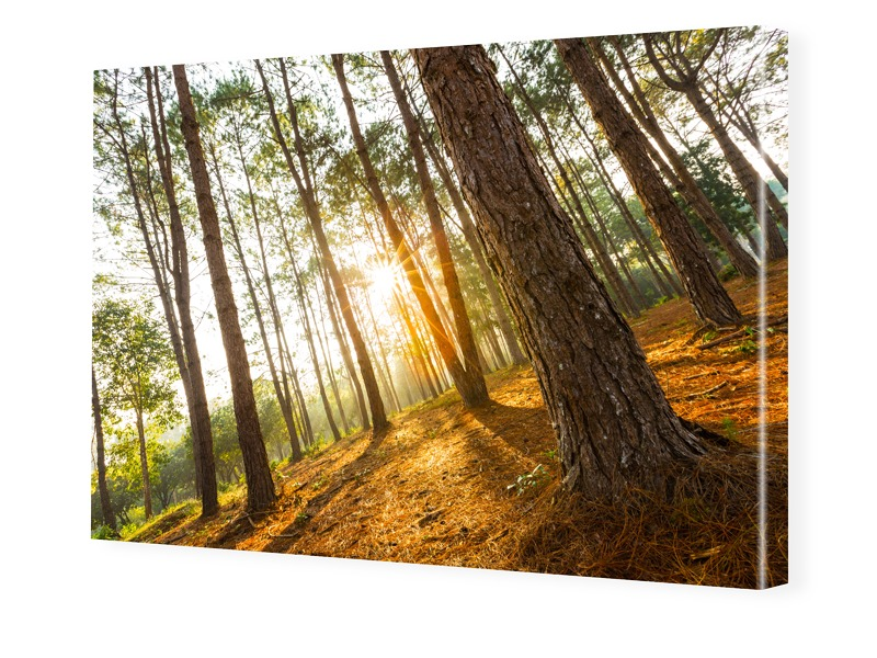 Waldbild Bilder auf Leinwand im Format 120 x 80 cm