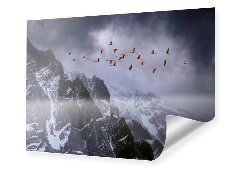 Flamingo Bilder Fotoposter im Format 120 x 80 cm