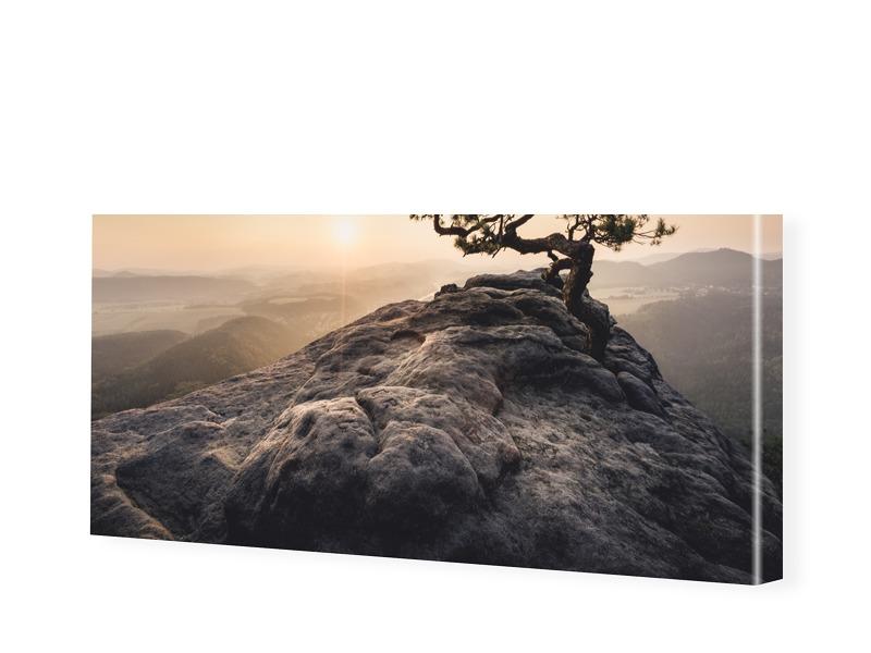 Old Pine Leinwandbild als Panorama im Format 18...