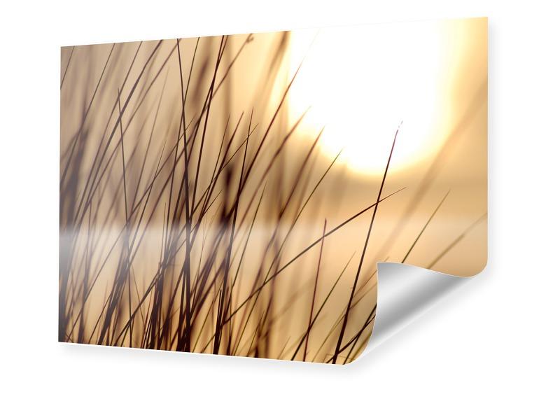 Gras Foto Poster im Format 80 x 60 cm