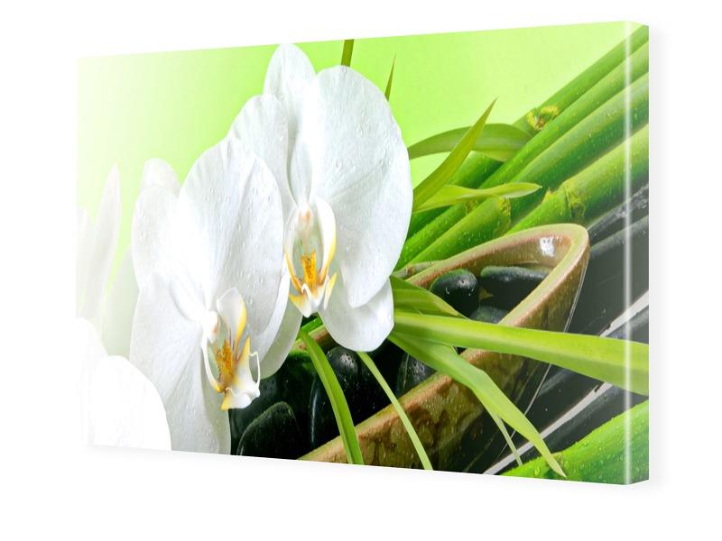 Orchideen Poster Photoleinwand im Format 60 x 5...