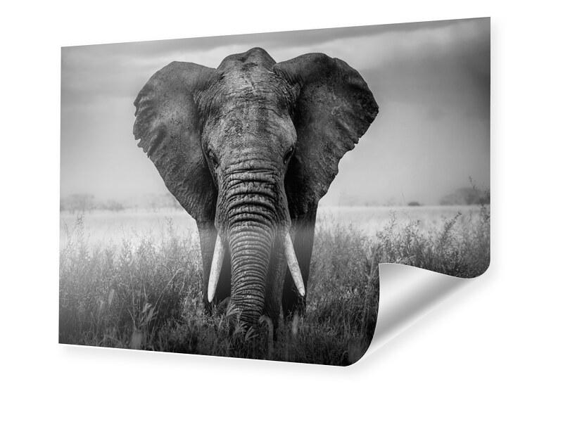 Elefant Portrait Poster im Format 80 x 60 cm