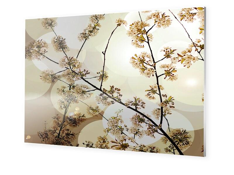 Bluetenfotos Photo auf Forex im Format 80 x 45 cm