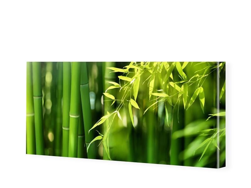 Bambusbild Leinwandbild als Panorama im Format ...