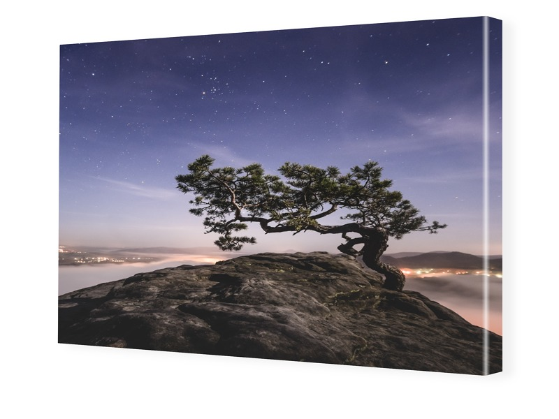 Old Pine, Sächsische Schweiz Bilder auf Leinwan...