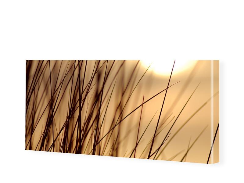 Gras Foto Leinwandbild als Panorama im Format 1...
