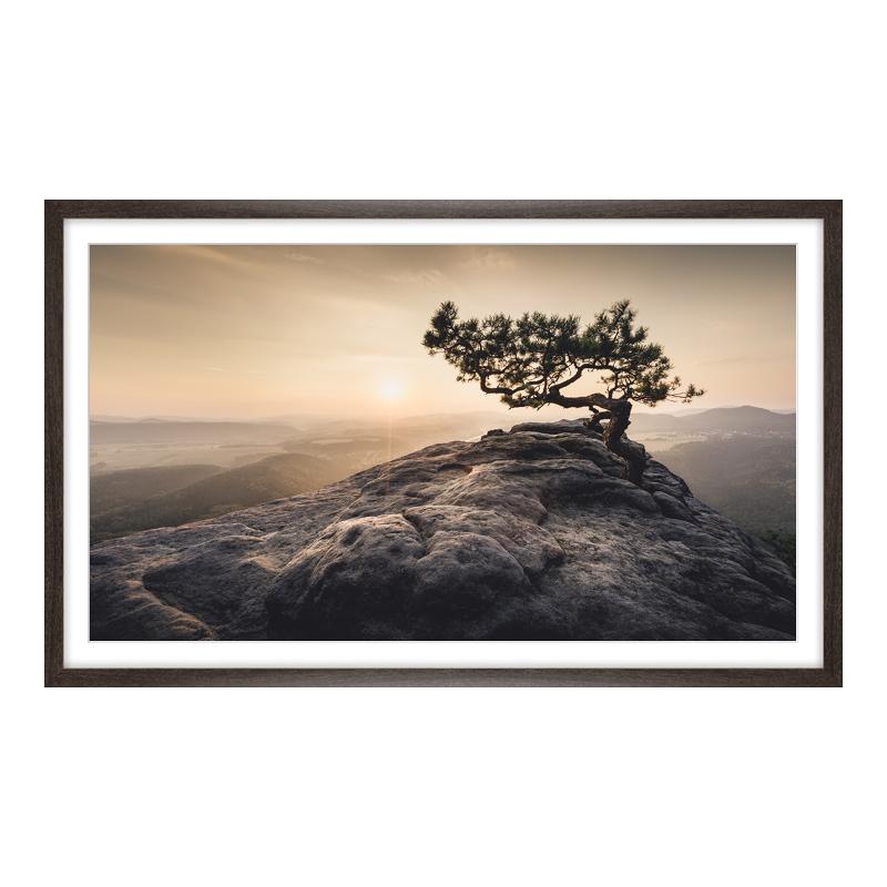 Old Pine XXL Poster im Riesen Holzrahmen gemase...