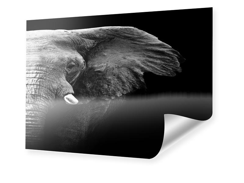 Bild Elefanten Poster im Format 80 x 60 cm