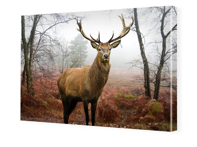 Hirschbilder Bilder auf Leinwand im Format 150 ...