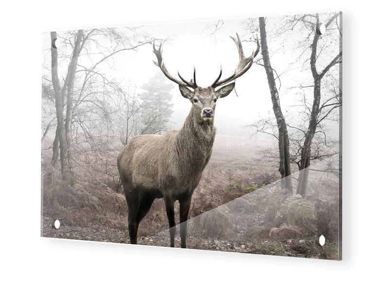 Hirschbilder Glasbilder XXL Im Format 120 X 80 Cm