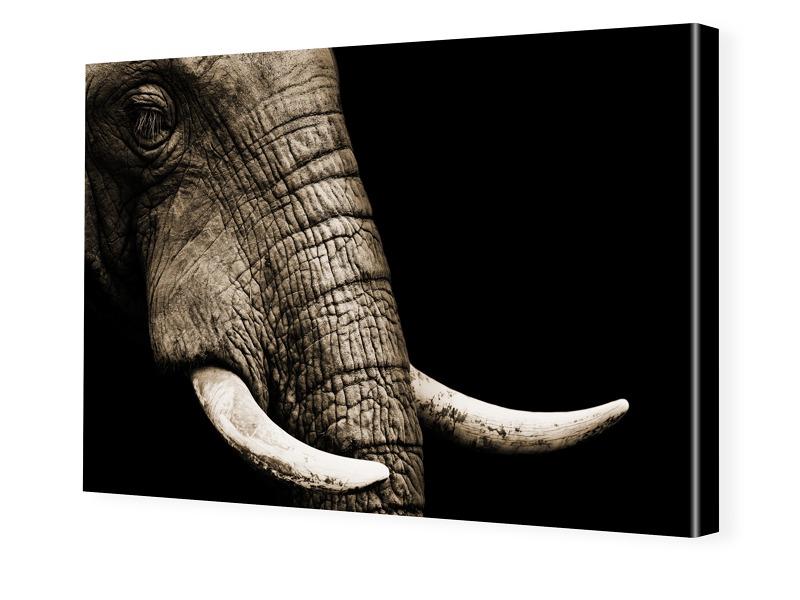 Elefanten-Bild Fotoleinwand im Format 90 x 60 cm