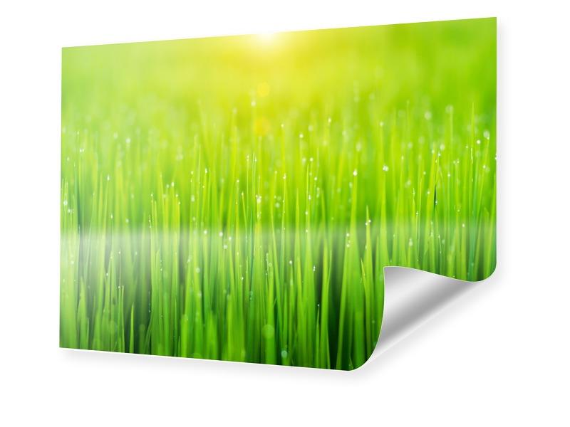 Tautropfen im Gras Poster im Format 40 x 30 cm