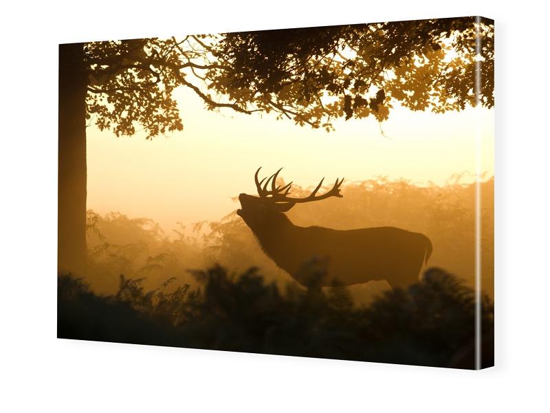 Hirschbild Foto auf Leinwand im Format 80 x 60 cm