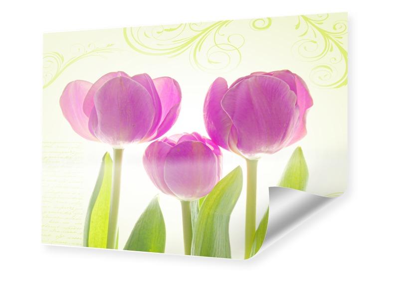 Tulpen Poster Foto im Format 50 x 40 cm