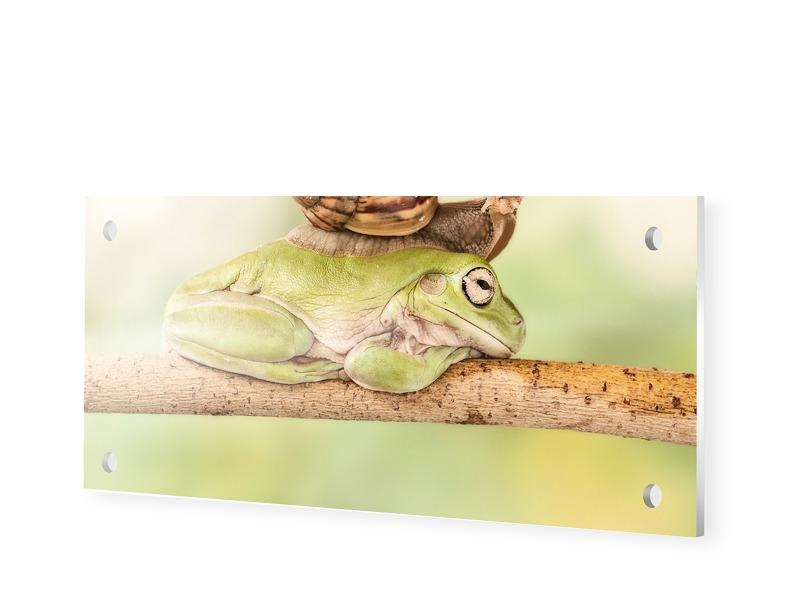 Schnecke auf Frosch Forexplatte als Panorama im...