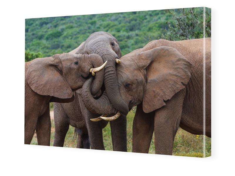 Elefantenbilder Foto auf Leinwand im Format 80 ...