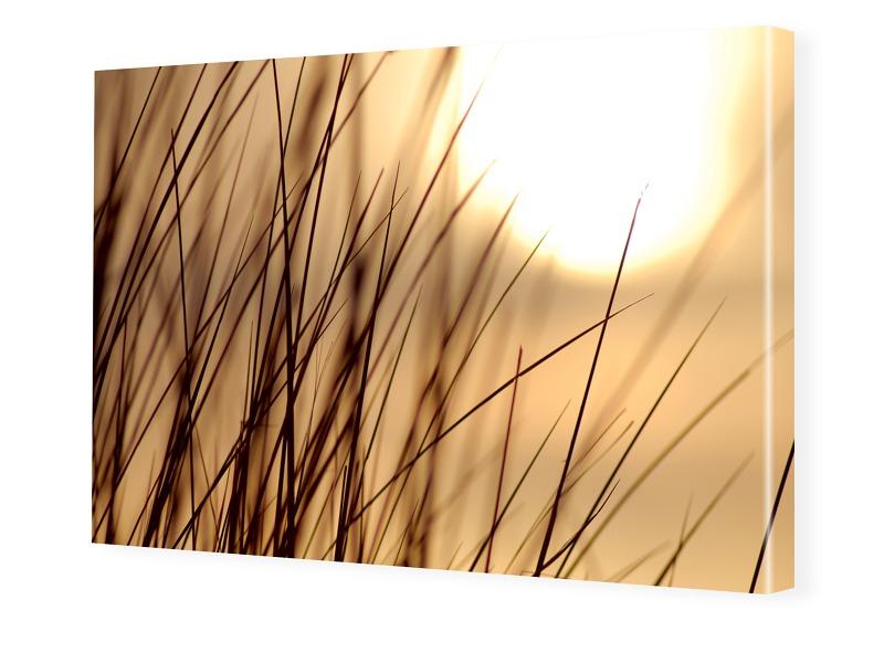Gras Foto Photoleinwand im Format 90 x 70 cm