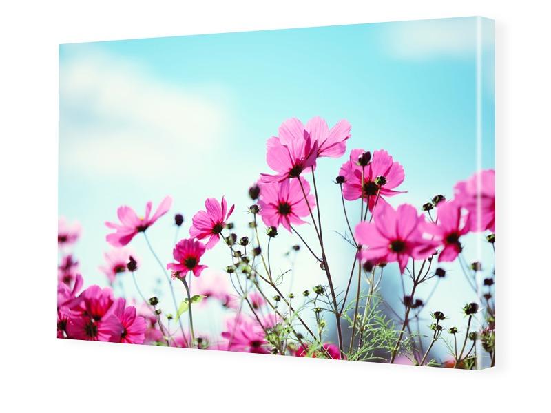 Blumenwiese Leinwand drucken im Format 160 x 90 cm