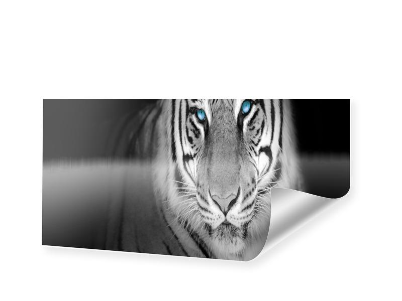 Tiger Panorama Poster als Panorama im Format 15...