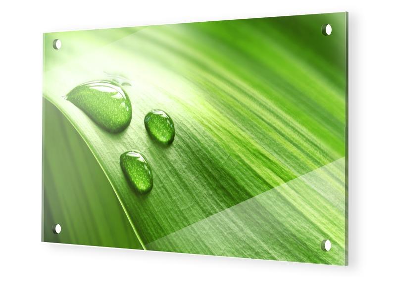 Grüne Bilder Plexiglas Bild im Format 160 x 90 cm