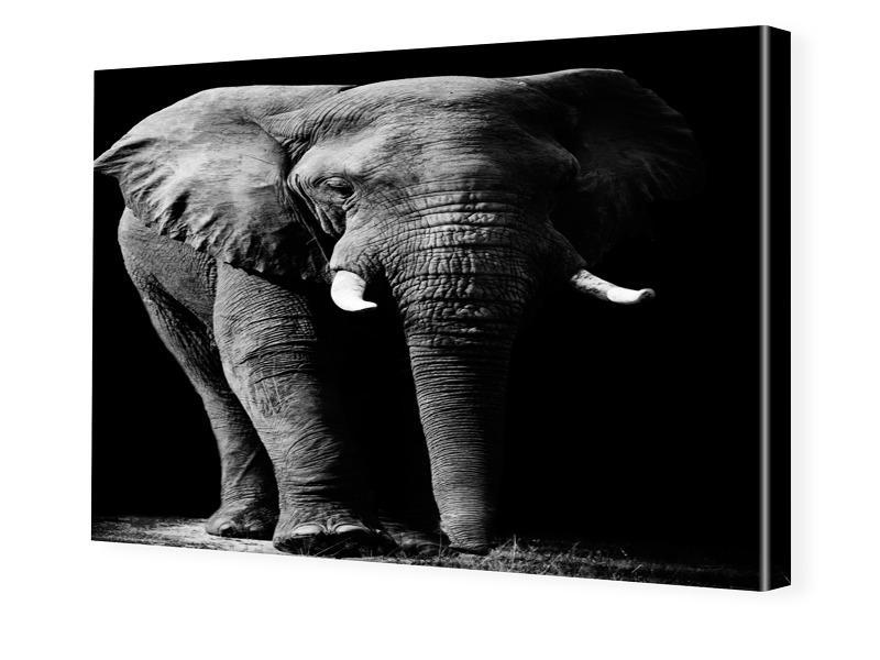 Elefantenbild Fotoleinwand im Format 90 x 60 cm