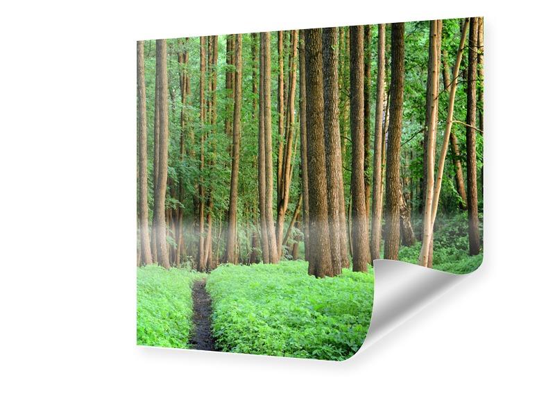 Wald Poster Fotovergrößerung quadratisch im For...