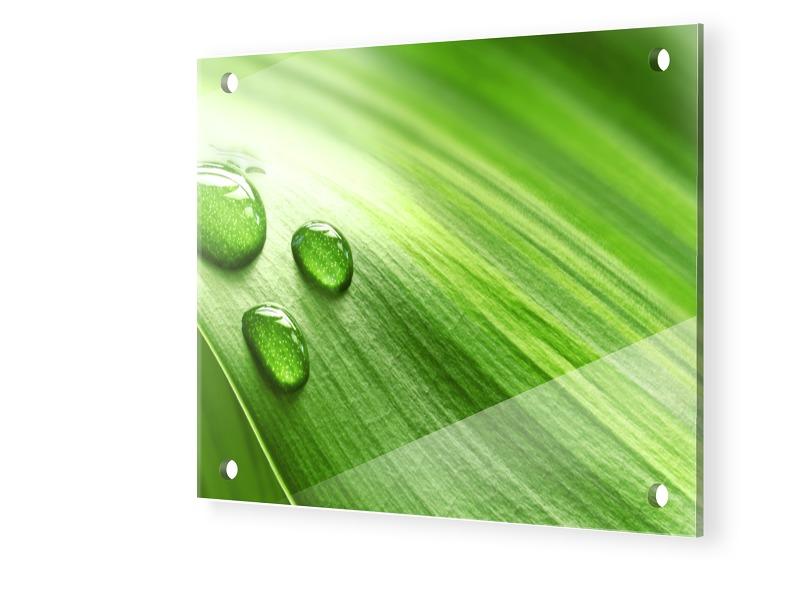 Grüne Bilder Acrylglasfotos quadratisch im Form...