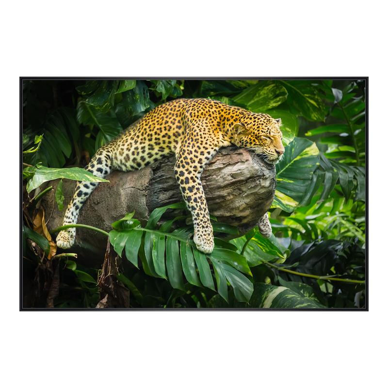 Leopard Motiv Foto im Rahmen aus Kunststoff in ...