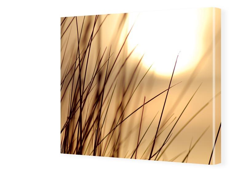 Gras Foto Bild auf Leinwand quadratisch im Form...