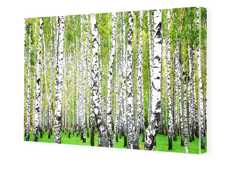 Birkenbilder Foto auf Leinwand im Format 80 x 6...