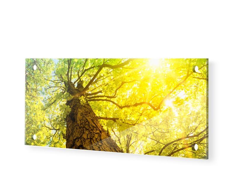Baum Sonnenstrahlen Acrylglas Panorama als Pano...