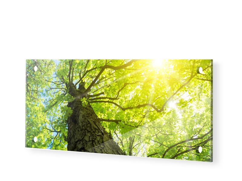 Baum Sonnenstrahlen Acrylglas Druck als Panoram...