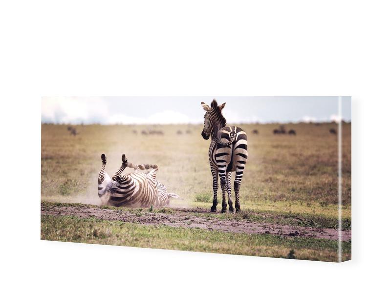 Zebras Fotografie Leinwandbild als Panorama im ...