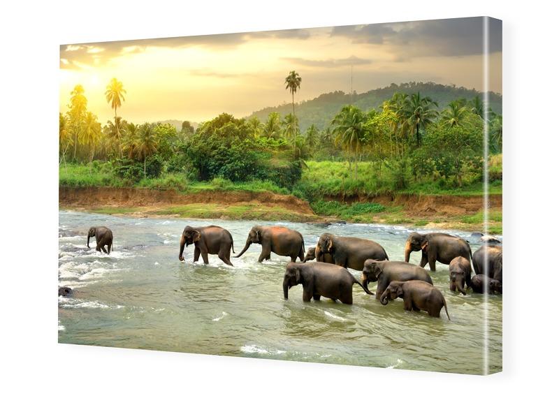 Elefantenherde Leinwand im Wunschformat im Form...