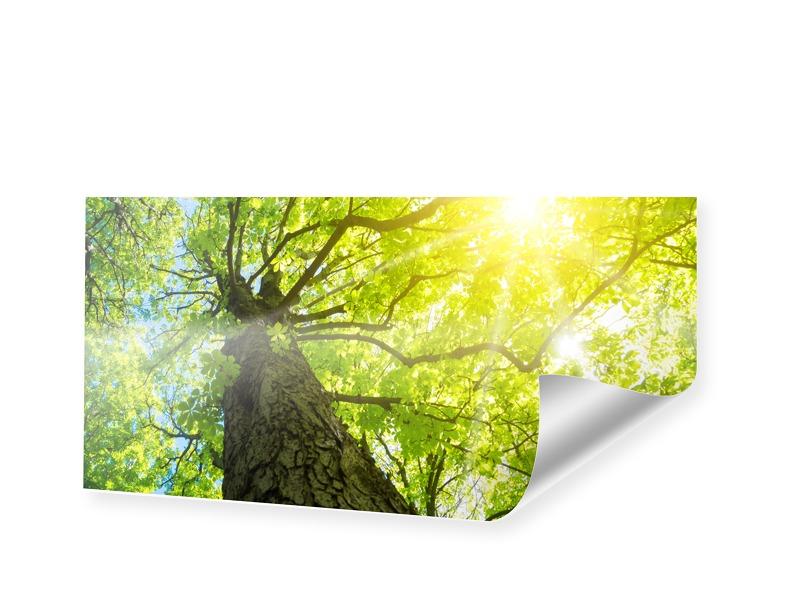 Baum Sonnenstrahlen Panoramadruck als Panorama ...