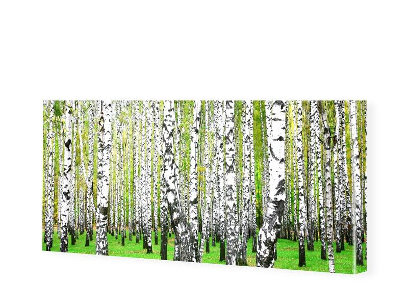 Birkenbilder Leinwandbild als Panorama im Forma...