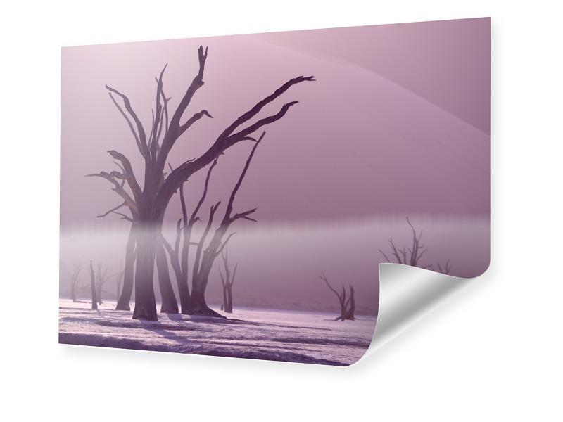 Bäume Foto Foto im Format 50 x 40 cm