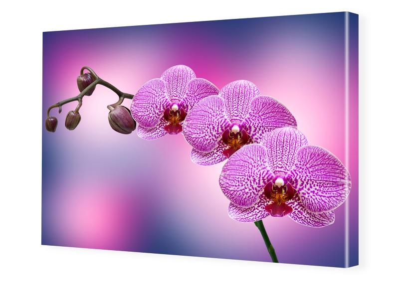 Orchidee auf Leinwand Leinwand im Wunschformat ...