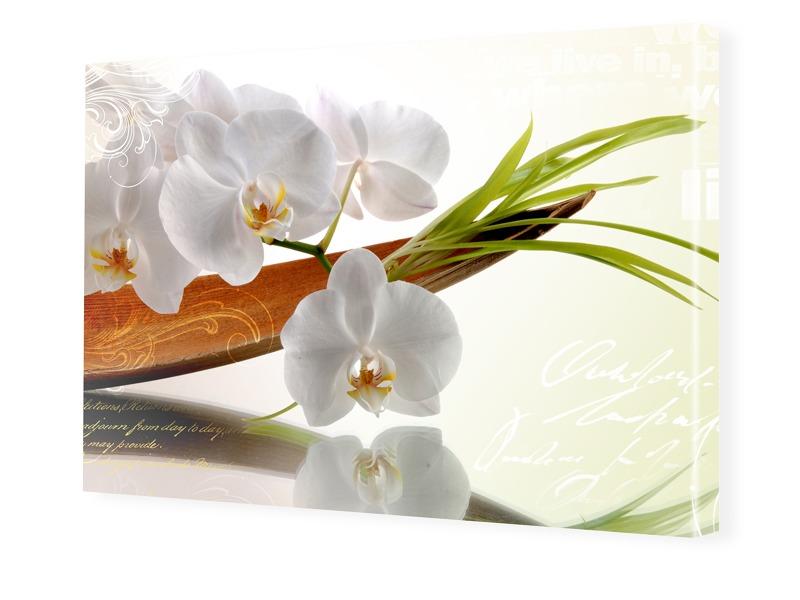 Bild Orchideen Foto auf Leinwand im Format 80 x...