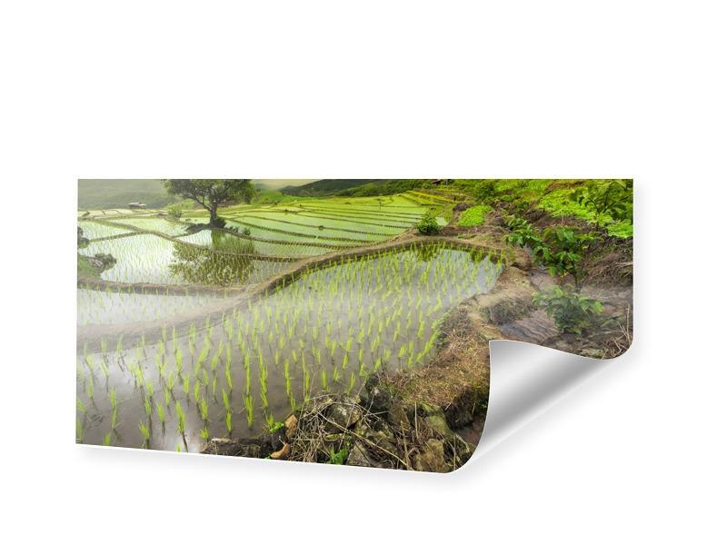 Reisfeldbild Panoramadruck als Panorama im Form...