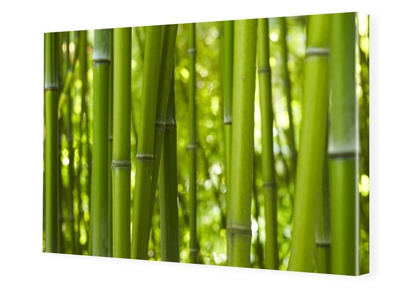 Bambusbilder Fotoleinwand im Format 90 x 60 cm