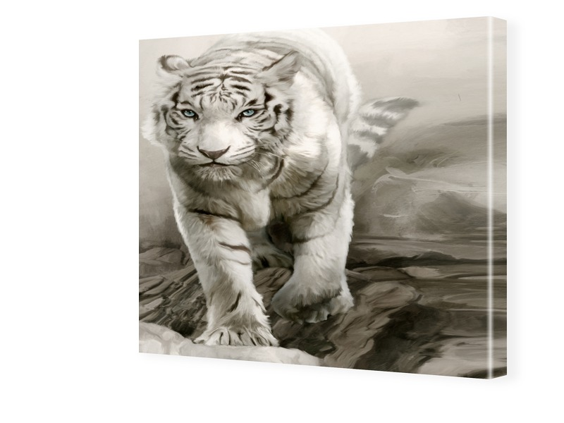 Tigerbilder Fotos auf Leinwand quadratisch im F...