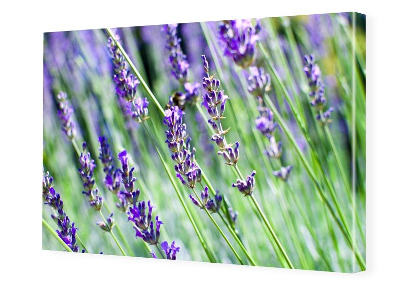 Lavendelbild Fotoleinwand im Format 90 x 60 cm