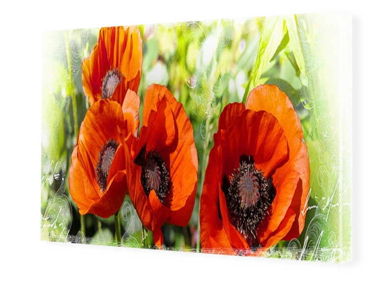 Mohnbild Foto auf Leinwand im Format 28 x 21 cm