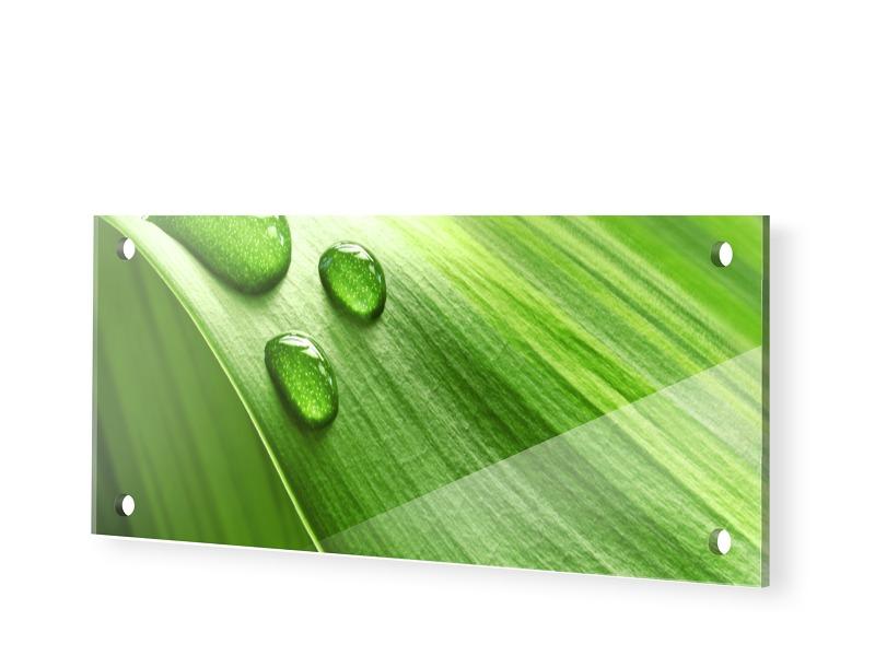 Grüne Bilder Foto auf Glas als Panorama im Form...