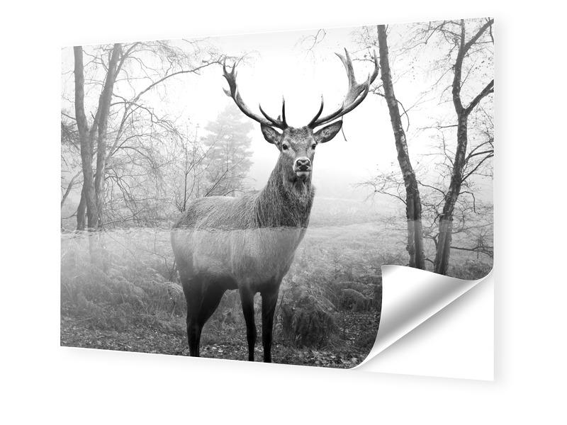Hirschbilder Fotos auf Folie im Format 90 x 60 cm